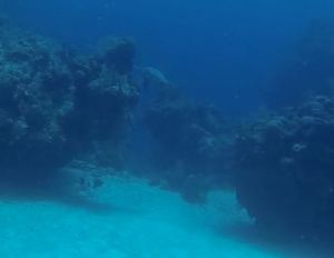 if you squint you can see a hawksbill turtle