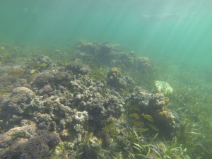 coral we explored during snorkel club
