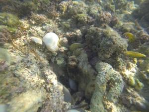 octopus friend