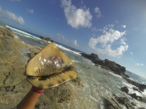 beautiful helmet conch