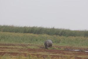 Hippo!!