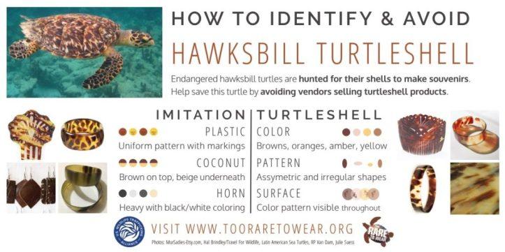 Tortoiseshell-1-1024x512.jpg